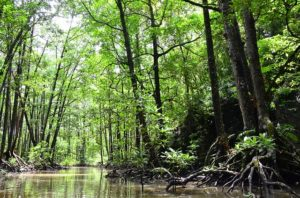 Kuba Reisetipps Mangroven