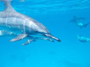Puerto Plata Delfine