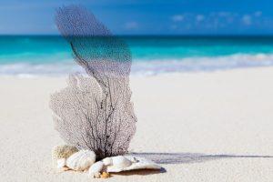 Karibik im Januar