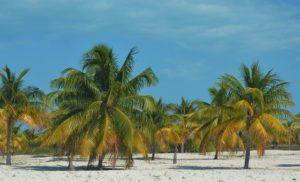Karibik im Februar