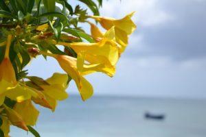 Karibik im Juli
