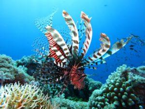 Punta Cana Urlaub Schnorcheln